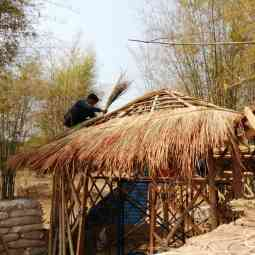 The art of thatching